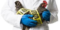 The 4 Key Parts of a Biosecurity Plan