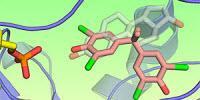 3D Images Show Flame Retardants Can Mimic Estrogens in Study