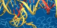 Research Reveals Structure of Key CRISPR Complex