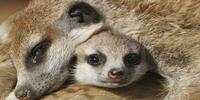 Love or Kill thy Neighbor? New Study into Animal Social Behavior
