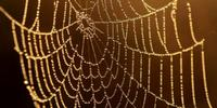 Synthetic Spider Silk Strong Enough for a Superhero