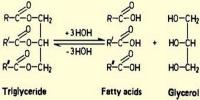 Fast and Simple Free Fatty Acids Analysis Using UPC2/MS