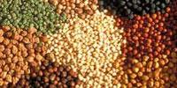 Beans, Peas, Chickpeas, Lentils Increase Fullness and Could Help Manage Weight