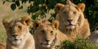 Big 5 Leadership: Learning from Africa's Most Fascinating Animals