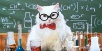 The Chemistry of Cats (video)