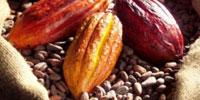 Evidence Continues to Mount that Cocoa Flavanols Boost Cognitive Function