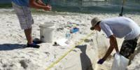 Study Details Impact of Deepwater Horizon Oil Spill on Beach Microbial Communities