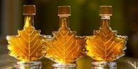 Could Maple Syrup Help Cut Use of Antibiotics?