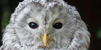 Silent Flights: How Owls Could Help Make Wind Turbines and Planes Quieter