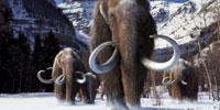 Landmark Genetic Analysis Identifies How Woolly Mammoth Adapted to Arctic Life