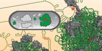 Researchers Design First Artificial Ribosome