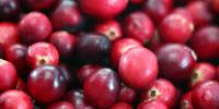 Powdered Cranberry Combats Colon Cancer in Mice
