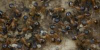 Ants May Have Reason to Be Anti-Work