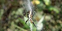 New Insights on Sun-Soaked Spider Webs Provide More Inspiration for Materials