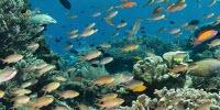 Thermal Sensitivity of Marine Communities Reveals the Most Vulnerable to Global Warming