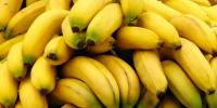 Panama Disease Threatens the Future of Bananas