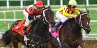 Rooting Out Doping in Racehorses