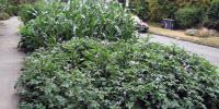 Risk of Lead Poisoning from Urban Gardening is Low, New Study Finds