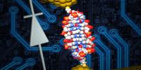 Researchers Use Single Molecule of DNA to Create World's Smallest Diode