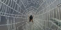 Spiders Spin Unique Phononic Material