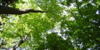 Eastern Forests Use up Nitrogen in Soil During Earlier, Greener Springs