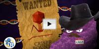 Genetically Modified Humans? CRISPR/Cas 9 Explained (Video)