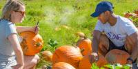 Pumpkin Study to Determine Best for Jack-O-Lanterns