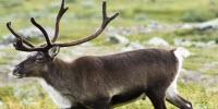 Could Rudolph and Friends Help to Slow down Our Warming Climate?