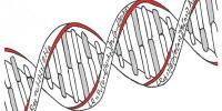 DNA Evidence Needs Statistical Back-Up