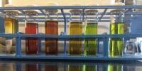 Vitamin B-12, and a Knockoff Version, Create Complex Market for Marine Vitamins