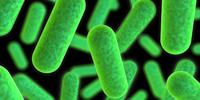 New Protein Discovery May Lead to New, Natural Antibiotics