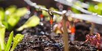 Pioneering Treatment Method Turns Sewage Sludge into Farm-Safe Fertilizer