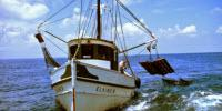 Unrestricted Improvements in Fishing Technology Threaten the Future of Seafood