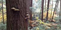 Imitating Old Growth Captures Carbon Better Than Traditional Forestry, Study Shows