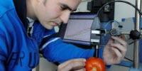 A Portable Measuring Device to Detect Optimum Ripeness in Tomatoes