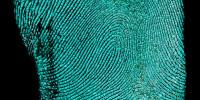 Do You Have What It Takes to be a Forensic Fingerprint Examiner?