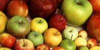 New Genomic Insights Reveal How the Modern Apple Came to Be