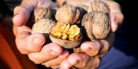 Study Says Eating Walnuts Improves Senior Nutrition in Unexpected Ways