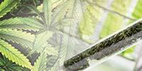 Measuring Chemicals in Cannabis