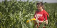 Breeding Highly Productive Corn Has Reduced Its Ability to Adapt