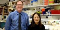 Critical Link between Obesity and Diabetes Has Been Identified