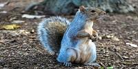 Hibernating Ground Squirrels Provide Clues to New Stroke Treatments