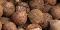 Farmers in Kenya Willing, Able to Ramp up Croton Nut Output for Biofuel
