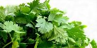 Why Do Some People Hate Cilantro?