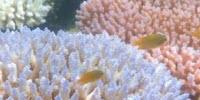 Global Warming Is Transforming the Great Barrier Reef