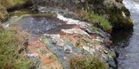 Do Bacteria Ever Go Extinct?