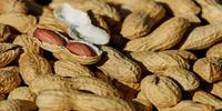 DNA-Based Method Detects Trace Amounts of Peanut in Foods