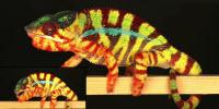 Nanotechnology and the Chemistry of Color-Changing Lizards