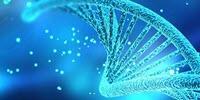 Precise Control of Gene Expression