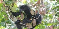 Why Leaf-Eating Asian Monkeys Do Not Have a Sweet Tooth